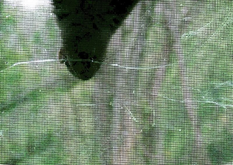 photoblog image squirrel window