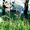 mating craneflies
