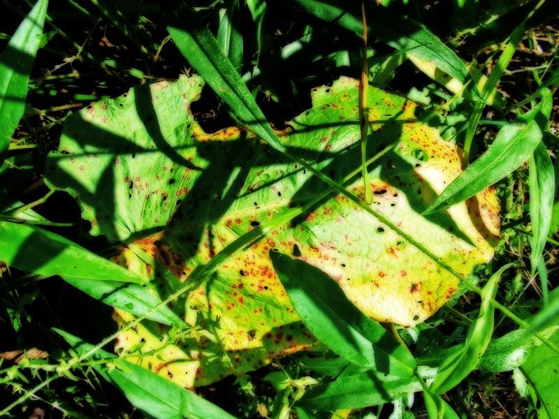 photoblog image dock leaf