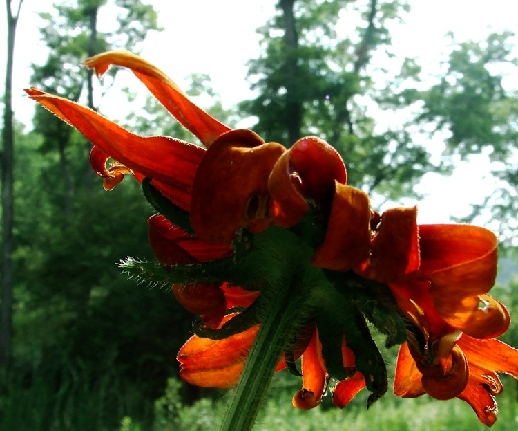 photoblog image attack of the killer rudbeckia