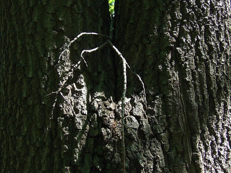 photoblog image birth of a tree