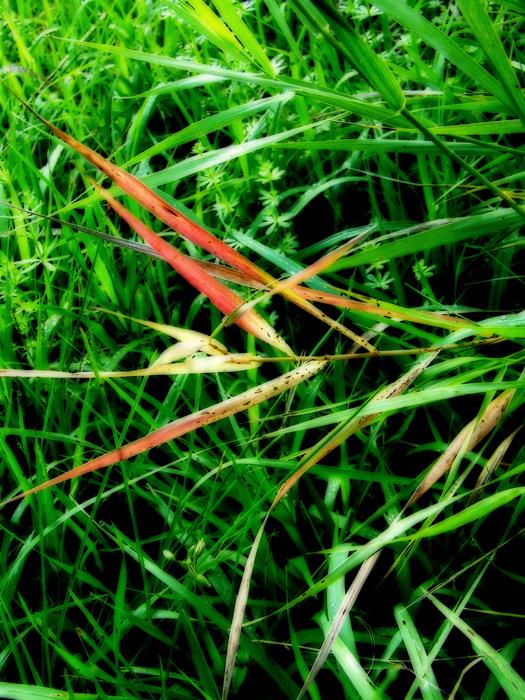 photoblog image red grass leaves