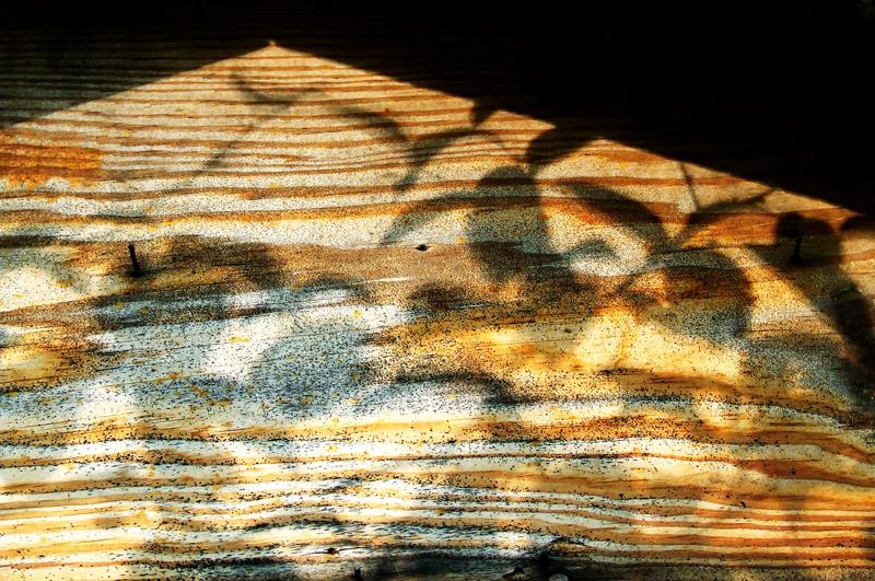 photoblog image autumn house