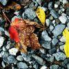 autumn gravel