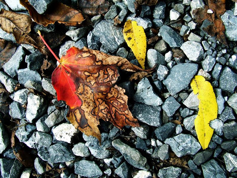photoblog image autumn gravel