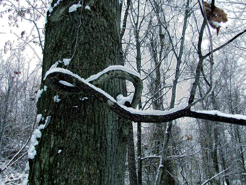 photoblog image infinity tree