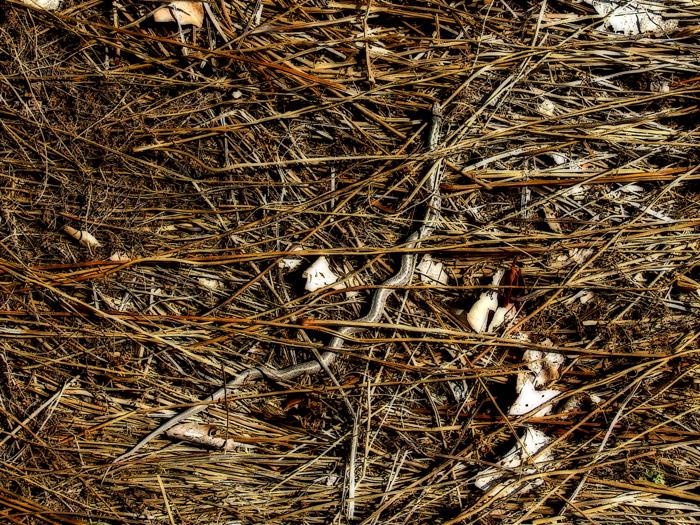 photoblog image snake