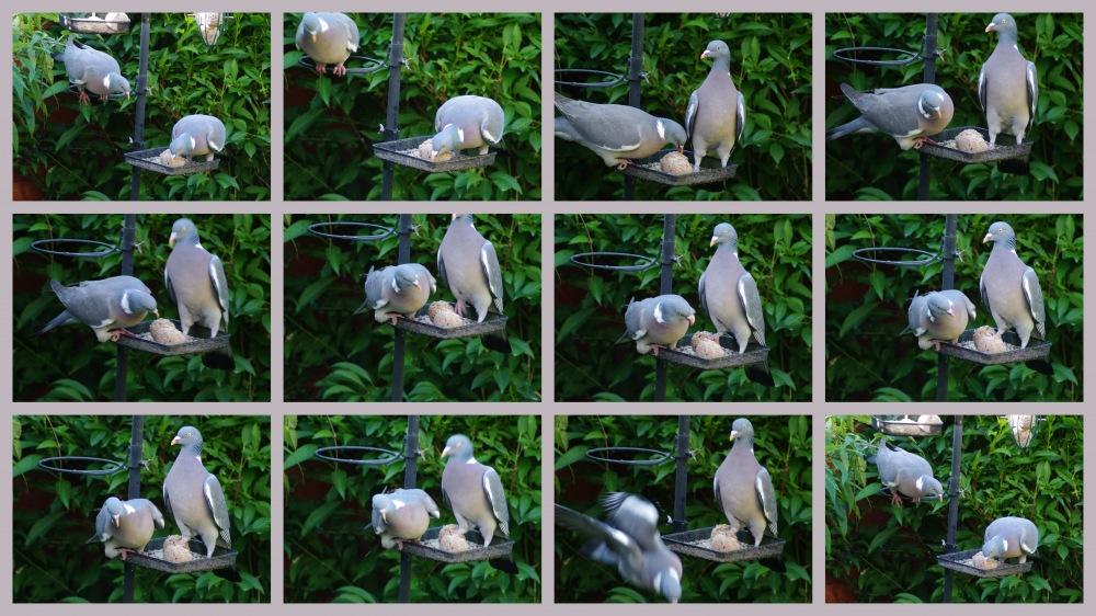 photoblog image Pigeons