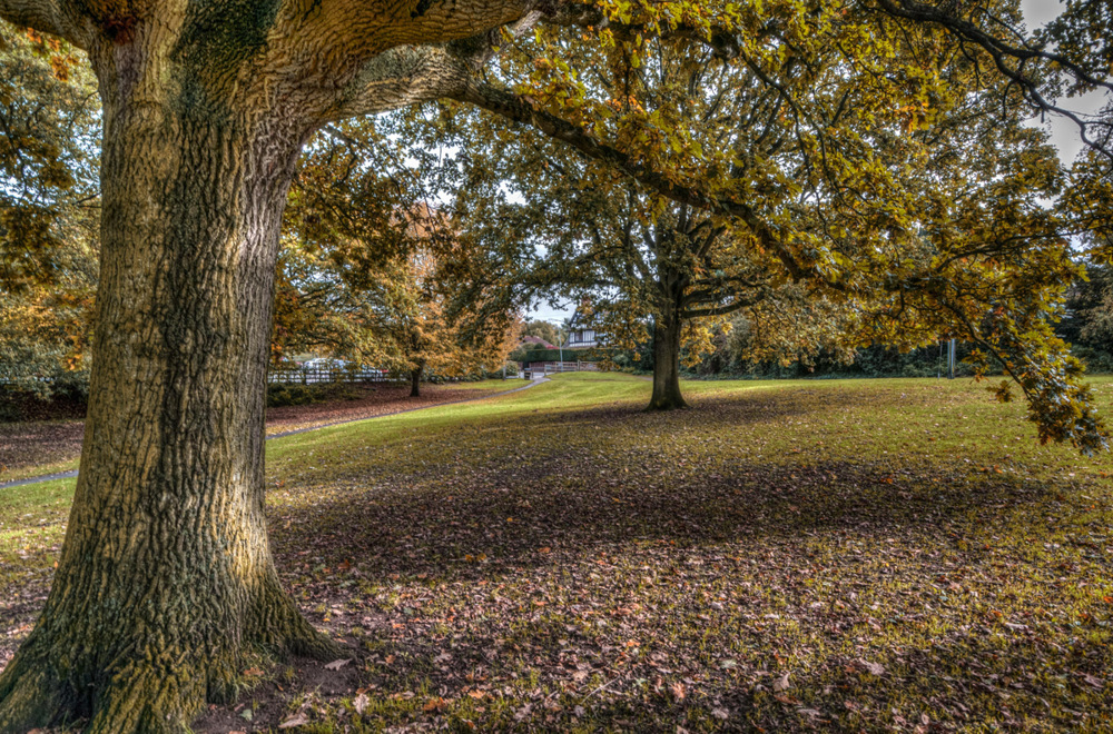 photoblog image Droitwich in Autumn