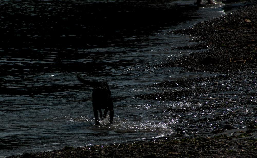photoblog image Blackdog