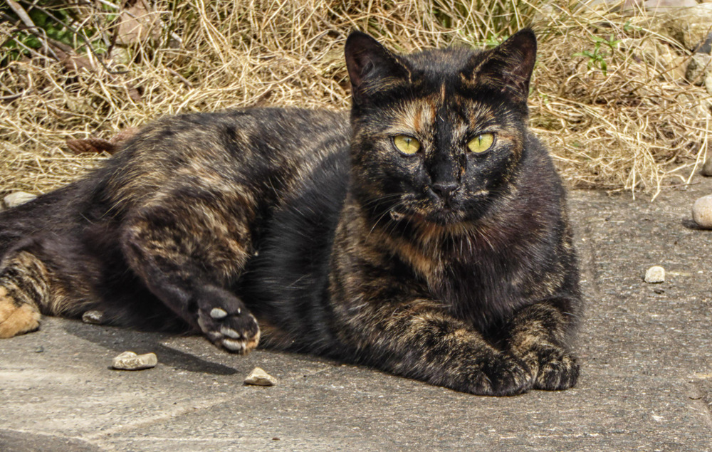 photoblog image Worcester Cat
