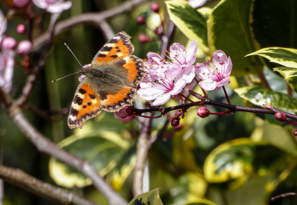 photoblog image Spring butterfly