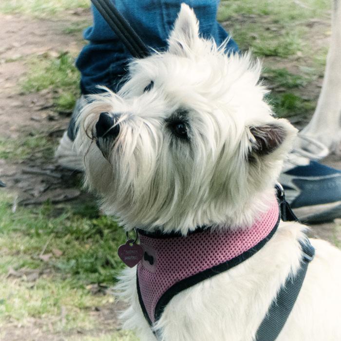 photoblog image Dog Saturday