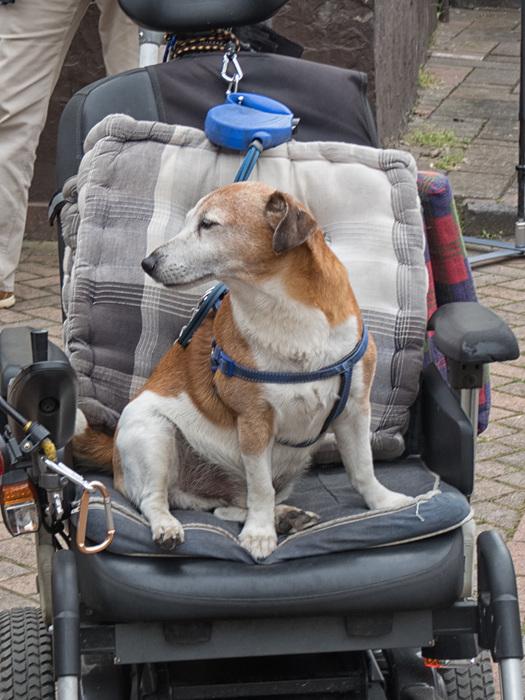 photoblog image Dog Cart