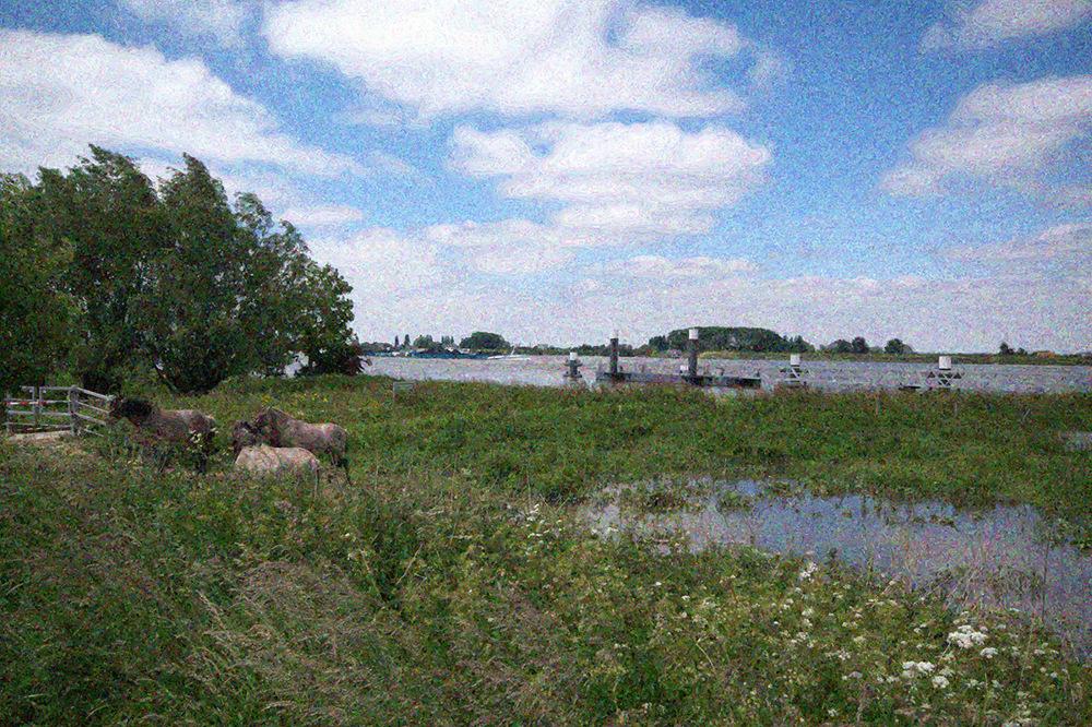photoblog image Dutch twiddles 6 of 5