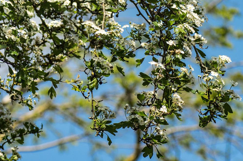 photoblog image Flars 6