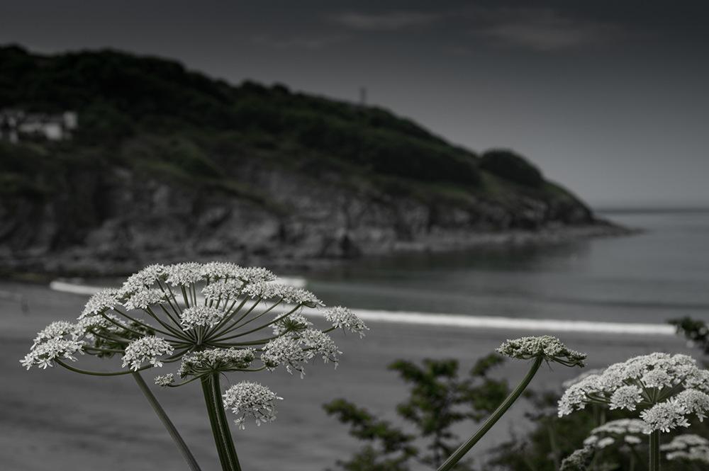 photoblog image Seaside plant