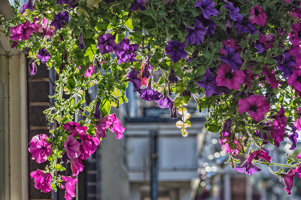 photoblog image The hanging gardens of Droitwich