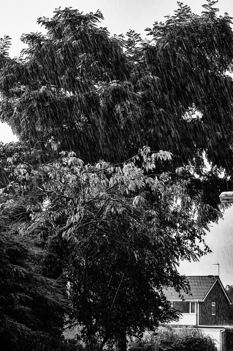 photoblog image Rain 3 of 3