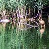 Nessie discovered in Warwickshire