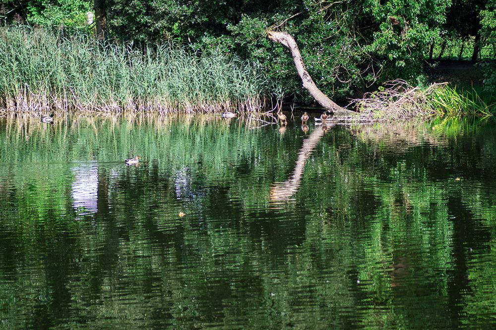 photoblog image Nessie discovered in Warwickshire