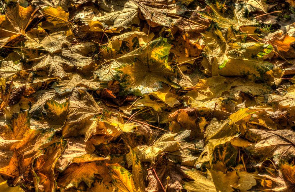 photoblog image Autumn Leaves