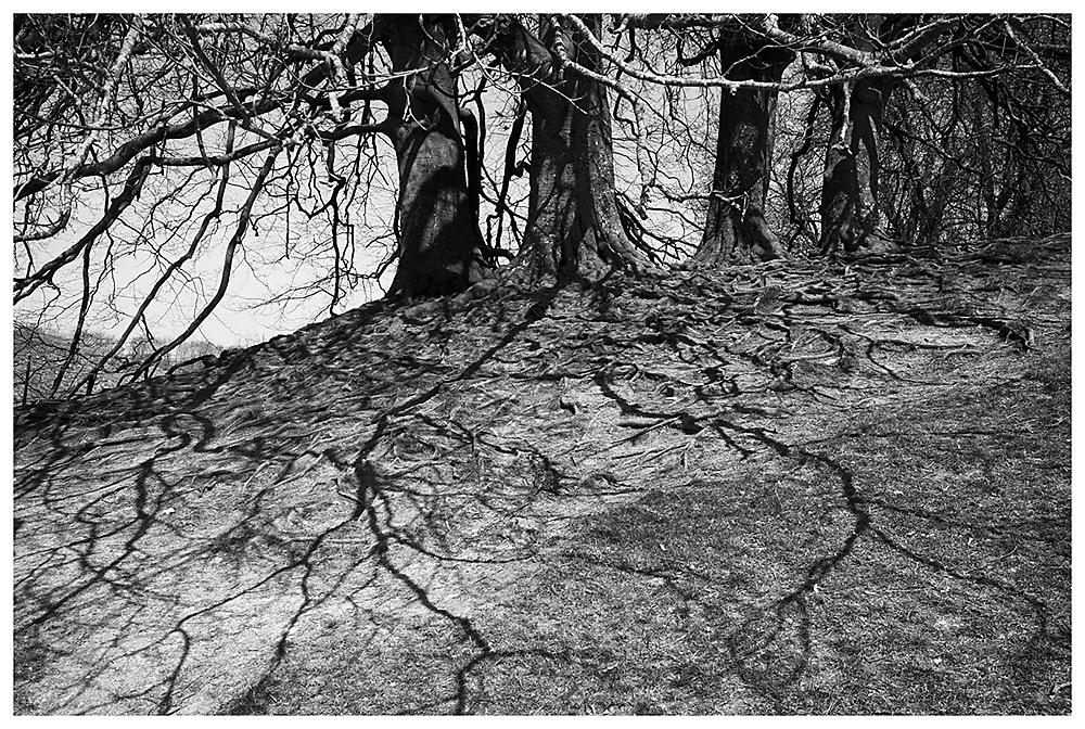 photoblog image Veins