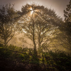 The Clent Hills revisited 5
