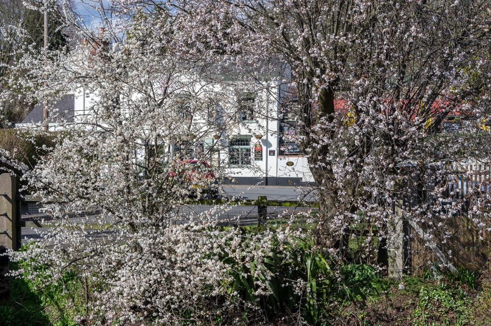 photoblog image Blossom
