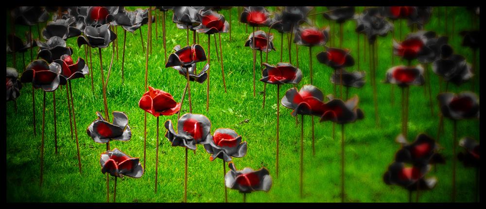 photoblog image Poppy