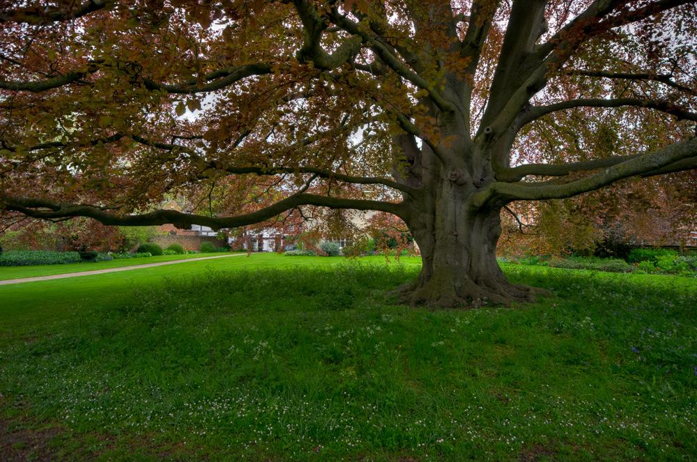 photoblog image Tree