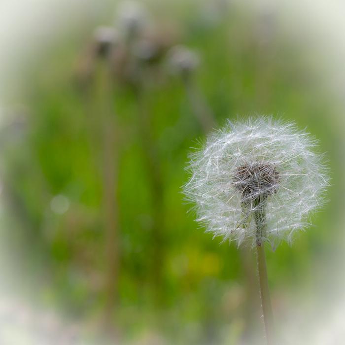 photoblog image weed 2