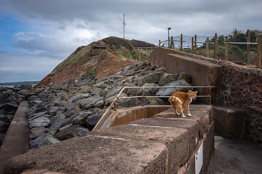 photoblog image A Seaside cat.