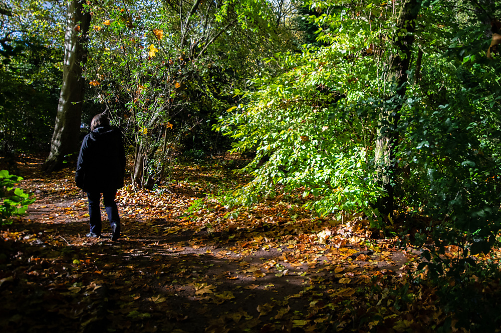 photoblog image A walk in the woods