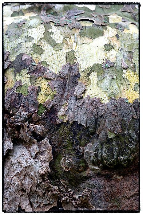 photoblog image Bark