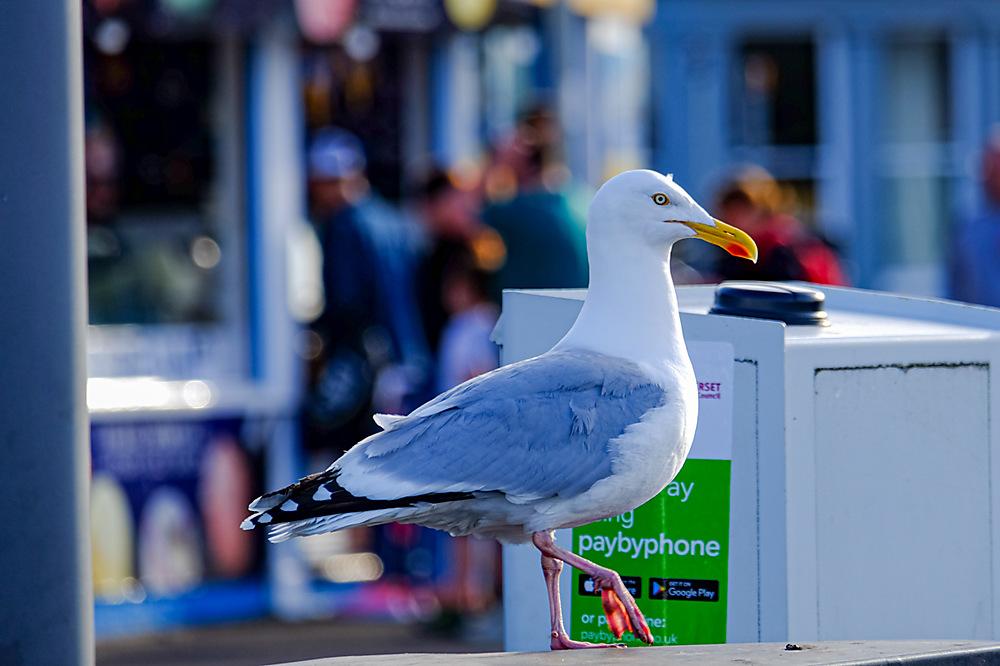 photoblog image Seagull Sunday