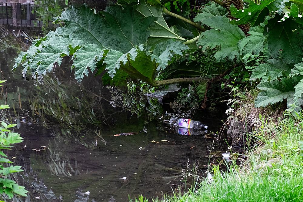 photoblog image Weekend Rubbish