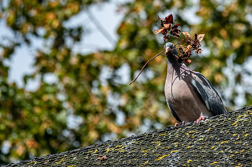 photoblog image I know it's not  ruddy olive branch