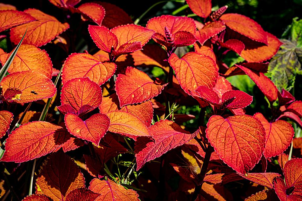 photoblog image Leaves