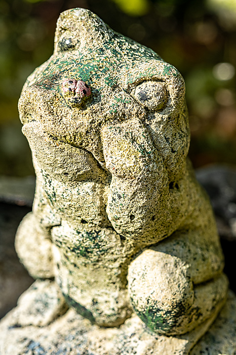 photoblog image A weathered Frog