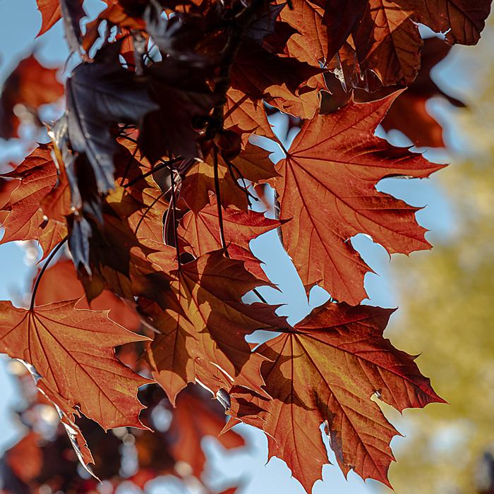 photoblog image Leafage