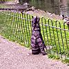 A wide eyed look at Gheluvelt park 4 of 5