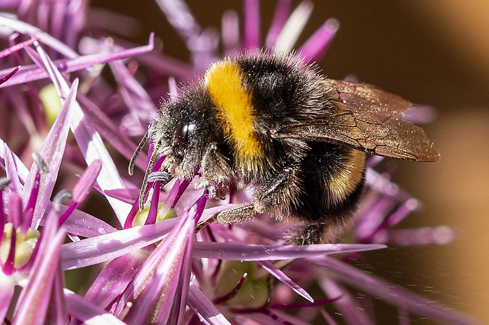 photoblog image Bumble Bee