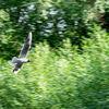 Action Bird