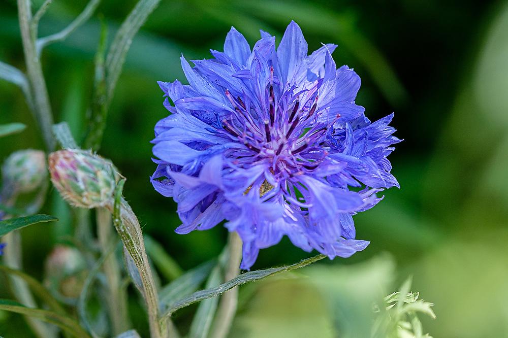 photoblog image Blue