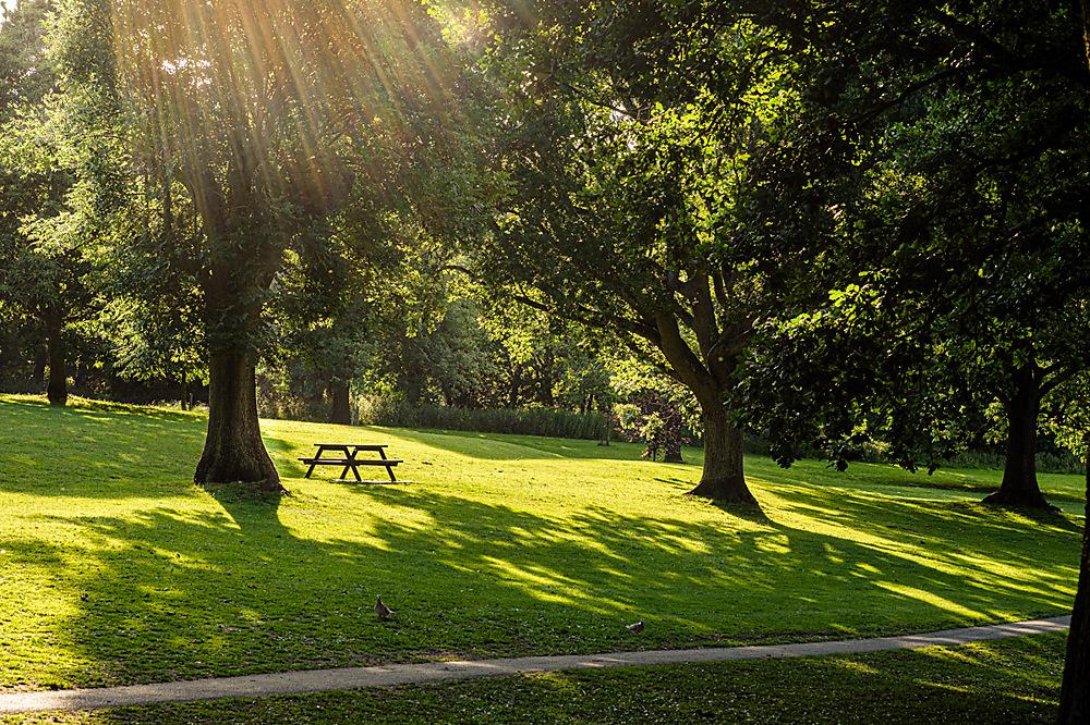 photoblog image Trees