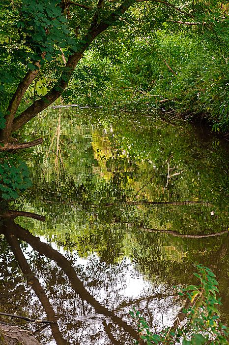 photoblog image Droitwich Community Wood