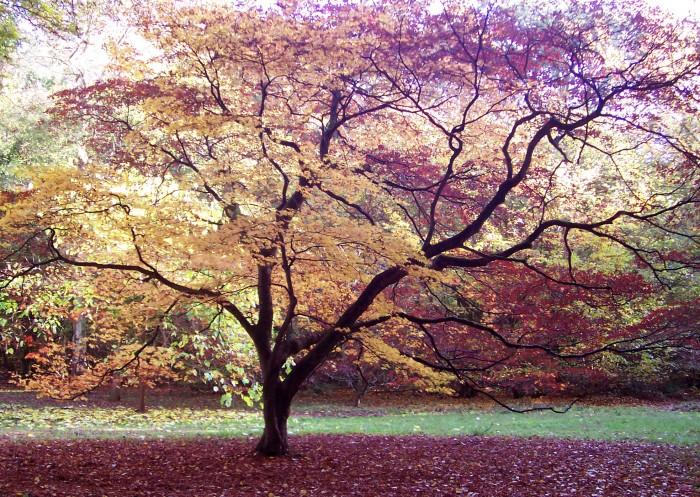photoblog image Westonbirt Arboretum