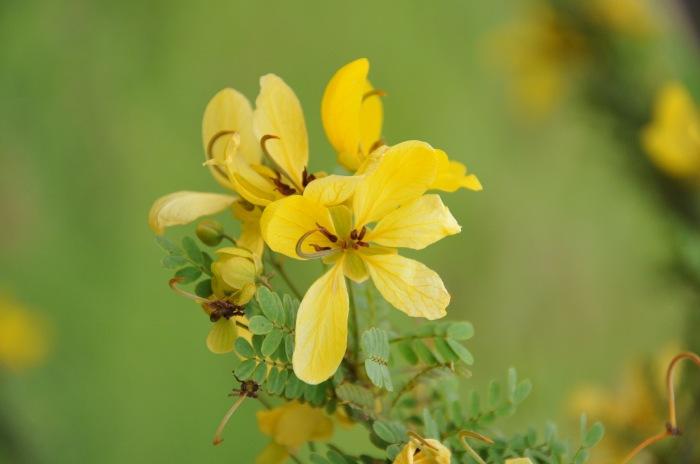 photoblog image flower!!!