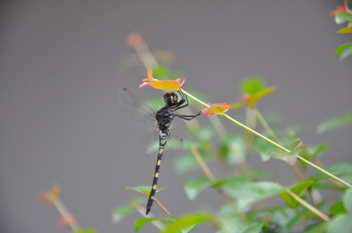 photoblog image dragon fly